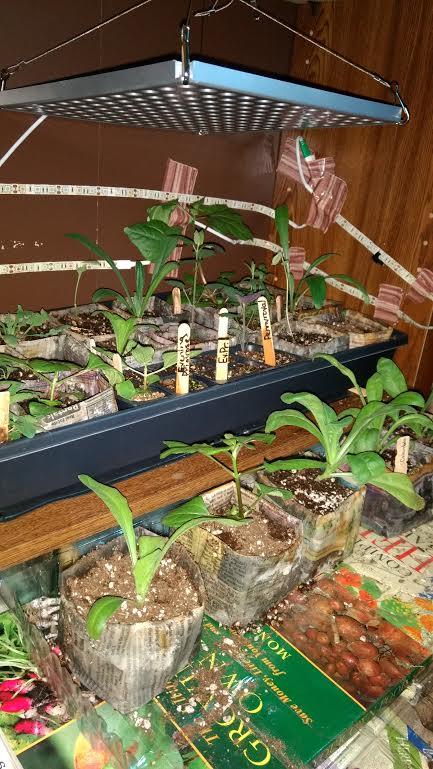 1 plants