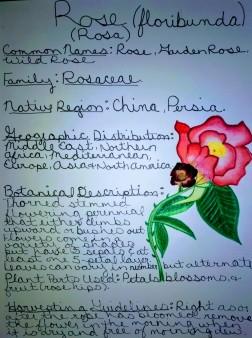 Rose Monograph