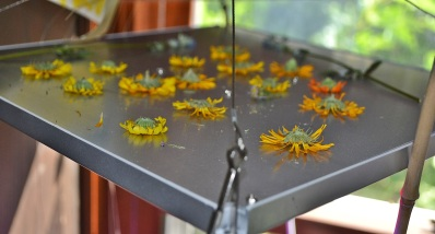 calendula drying