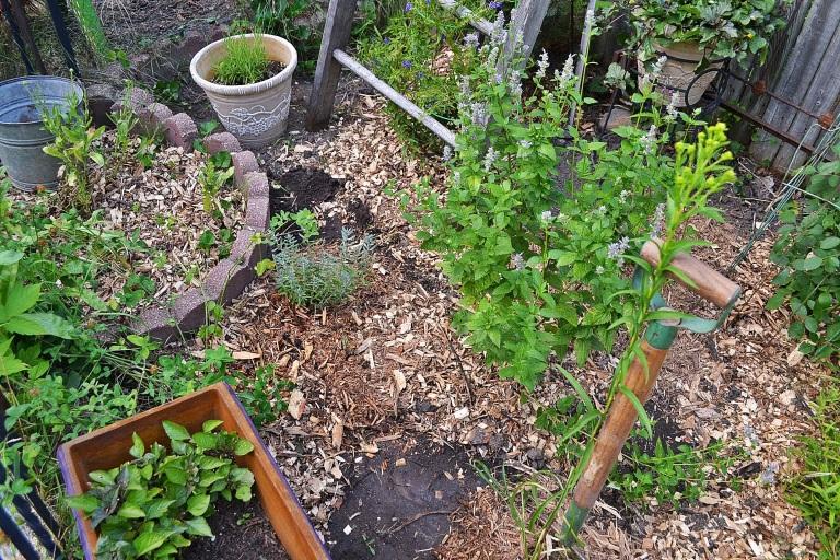 herb garden makeover